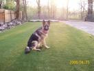 90-waldo likes grass