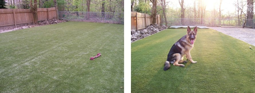 k9grass by foreverlawn