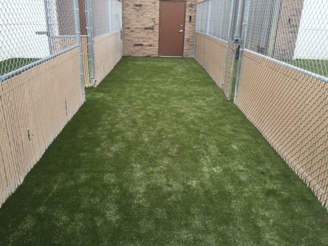 Camp Bow Wow K9Grass Complete Installation
