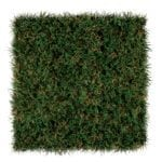 SportsGrass Edge XP