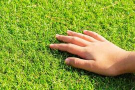 Artificial Grass Is Easier to Maintain Than Real Grass
