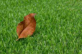 Turf Maintenance Tips for Fall Season